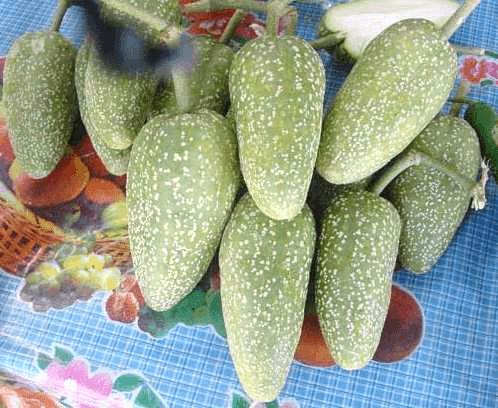 Abiyuch
